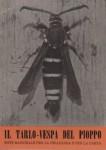 Il tarlo vespa del pioppo (sciapteron tabaniforme)